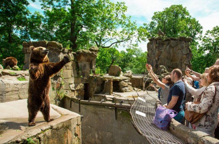 kaliningradskiy-zoopark-700x462