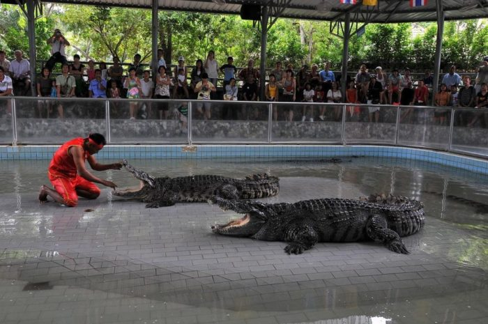 krokodilovaya-ferma-700x465