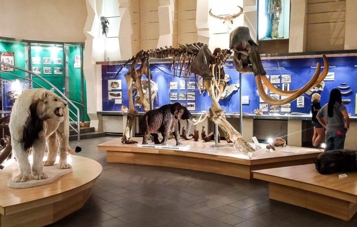 muzej-mamonta-700x445
