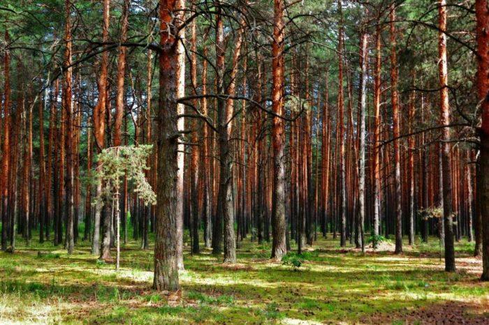 nacionalnyj-park-pripyshminskie-bory-700x466