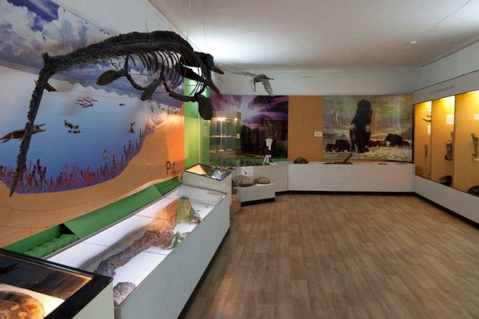 undorovskiy-paleontologicheskiy-muzey-700x466