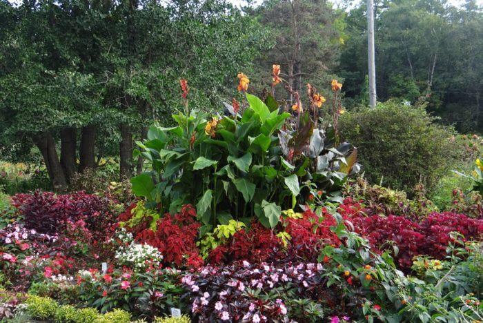 botanicheskij-sad-institut-dvo-ran-700x468