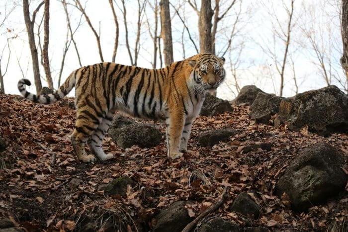 primorskij-safari-park-700x467