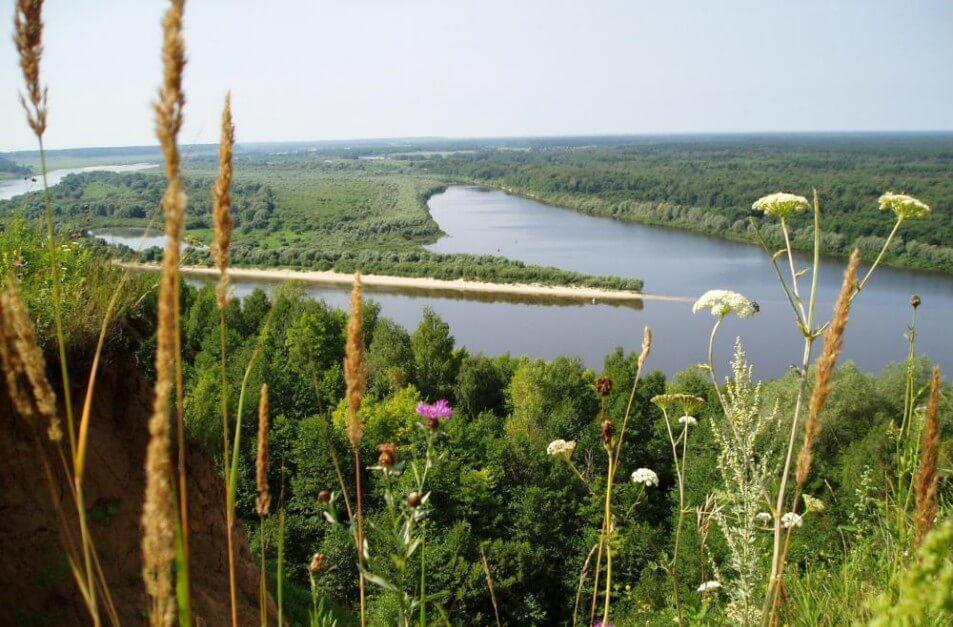 растительность нижегородской области фото юный