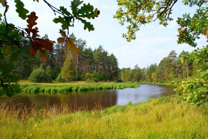 nacionalnyj-park-meshchyorskij-700x469