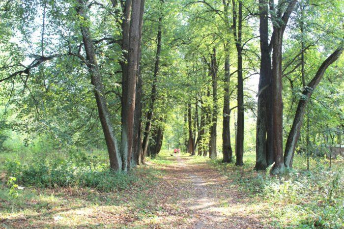 dendrologicheskij-park-volhonka-700x466