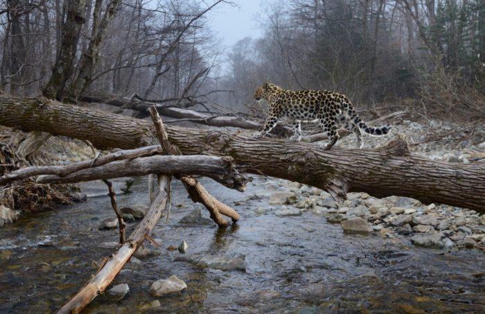 zemlya-leoparda-700x453