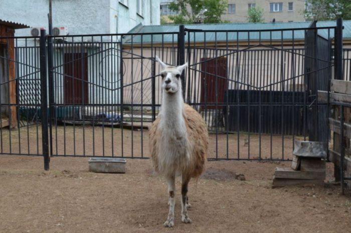 chitinskij-zoopark-700x464