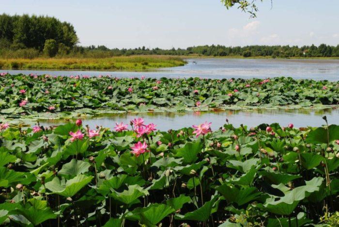 lotosovye-ozera-700x469