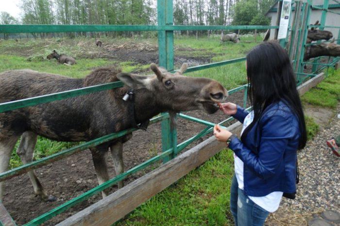 sumarokovskaya-losinaya-ferma-700x465