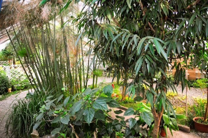 zabajkalskij-botanicheskij-sad-700x465