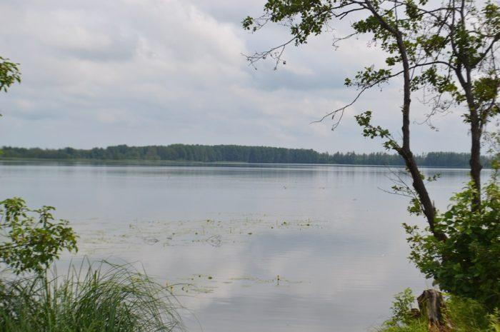svinoshnoe-700x465
