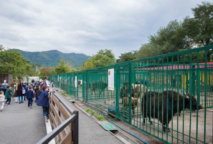 vladikavkazskij-zoopark-700x473