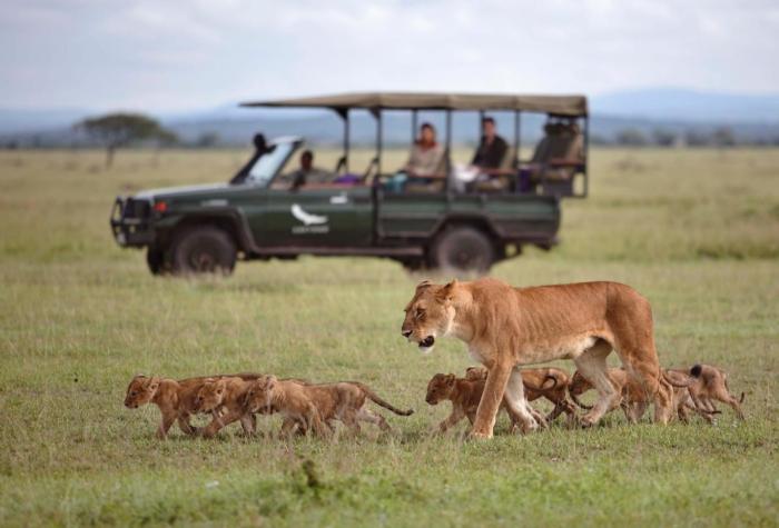 serengeti-700x475