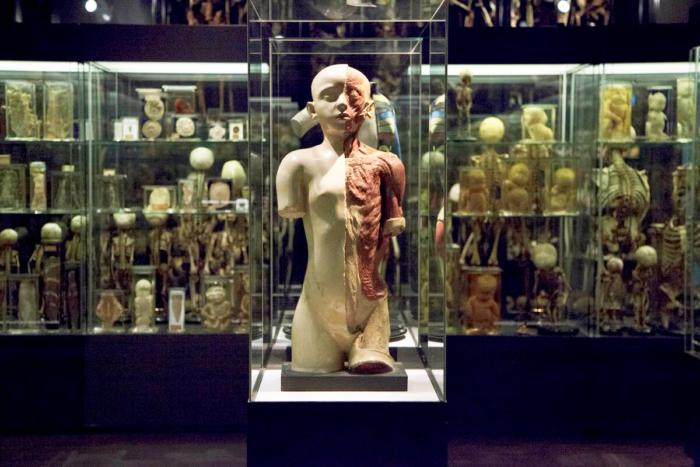 muzej-vrolika-700x467