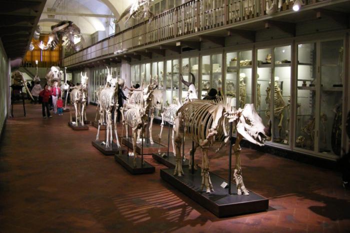 muzej-estestvennoj-istorii-700x467