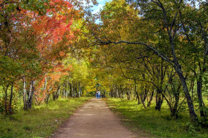 dendropark-lesovodov-700x466