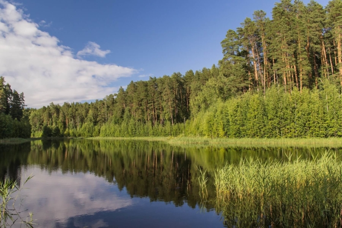 ozero-chvaniha-v-medvedskom-boru-700x467