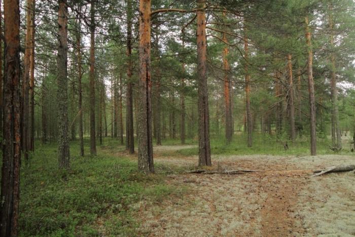 baranovskij-bor-700x468