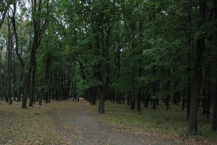 dendropark-vgau-700x469
