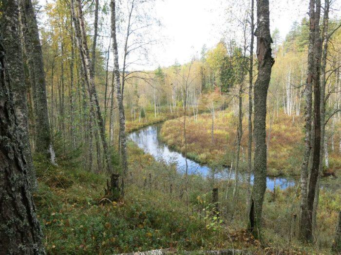 dolina-reki-smorodinki-700x525