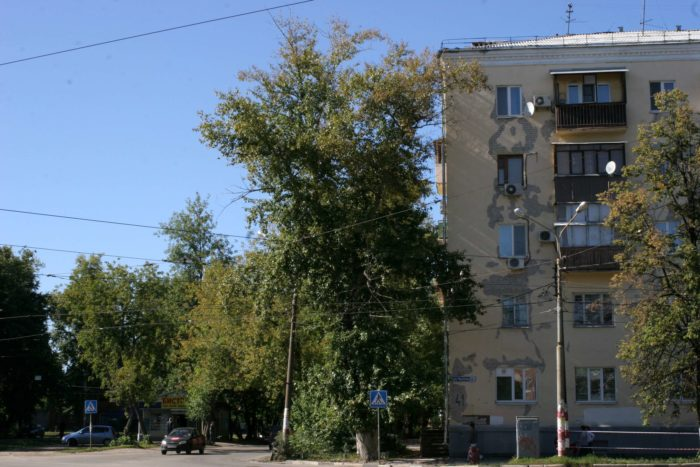 topol-dolgozhitel-na-peresechenii-ulits-oktyabrskoi-revolyutsii-i-chkalova-700x467