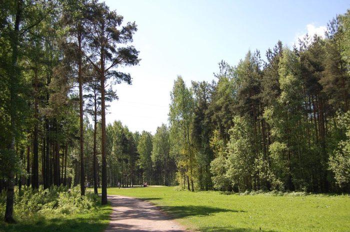 park-sosnovka-istoki-murinskogo-ruchya-700x465
