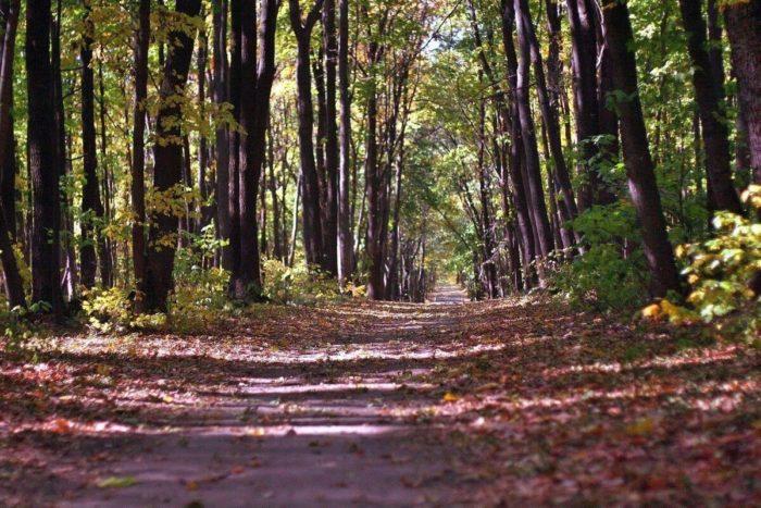park-severnyy-les--700x467