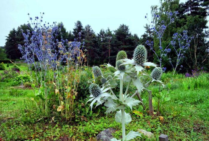 botanicheskiy-sad-petrozavodskogo-gosudarstvennogo-universiteta-700x471