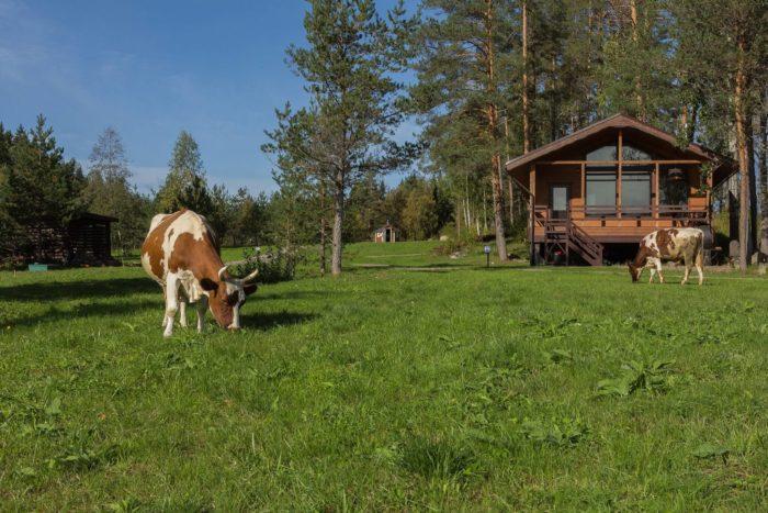 park-otel-hutor-yarvi-700x467