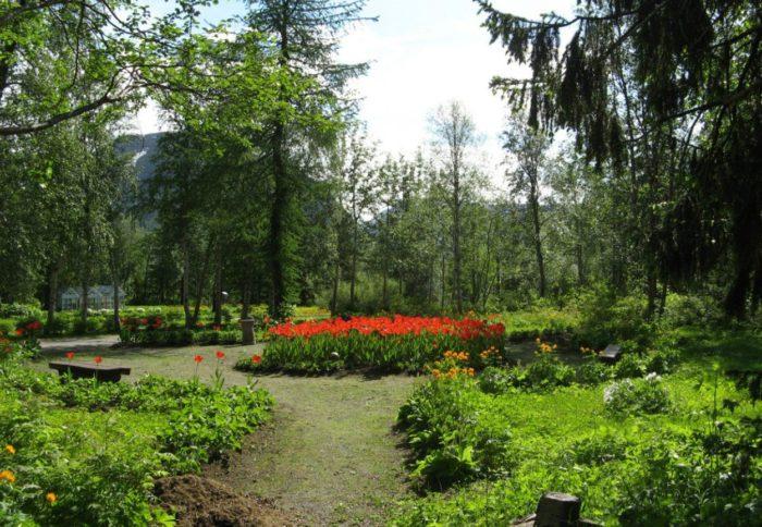 polyarno-alpiyskiy-botanicheskiy-sad-institut-im.-n.-a.-avrorina-700x484