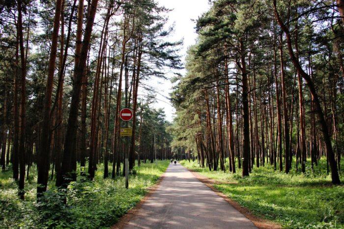 bobachyovskaya-roscha-700x466