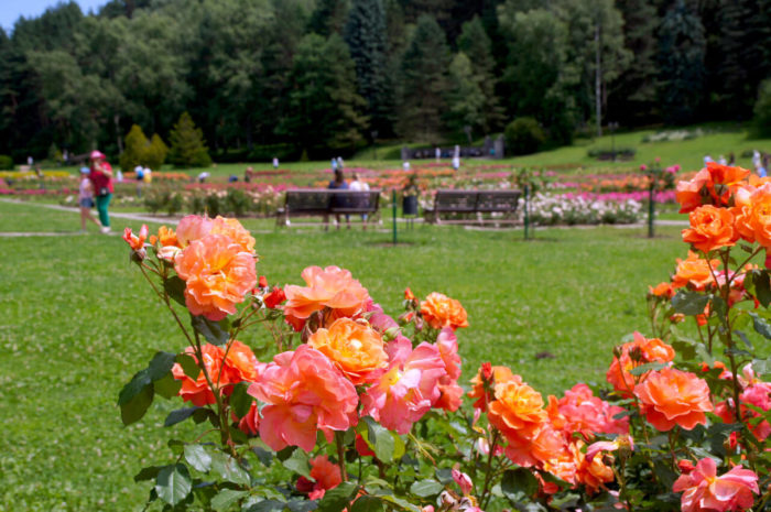 dolina-roz-700x465