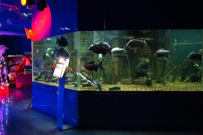 krasnodarskiy-okeanarium-okean-park-700x466