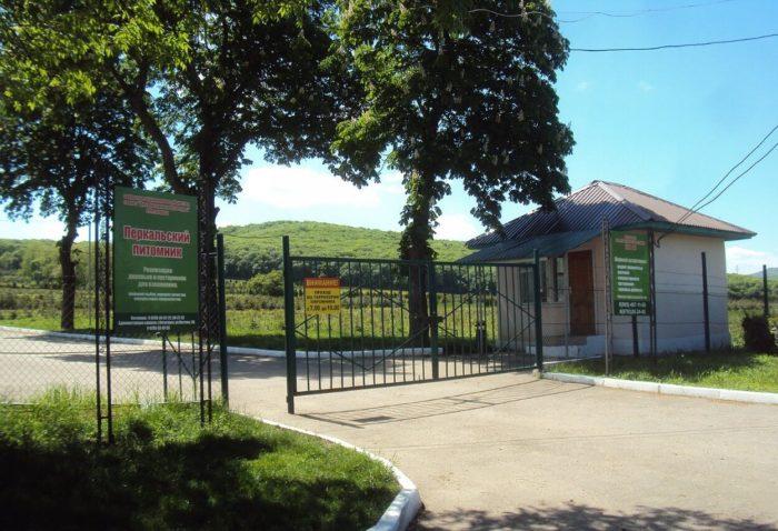 perkalskiy-dendrologicheskiy-park-700x478
