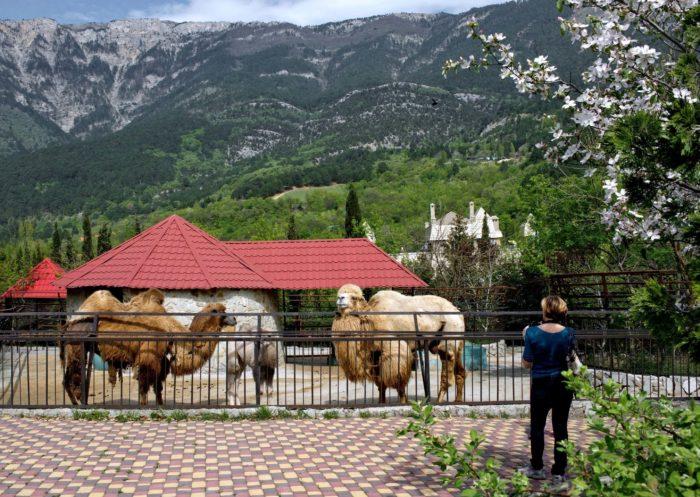 yaltinskiy-zoopark-skazka-700x497