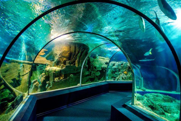 okeanarium-sochi-discovery-world-aquarium-700x467