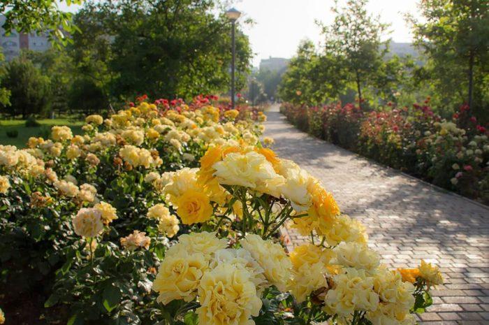 park-orehovaya-roscha-700x465