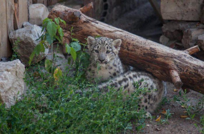 permskiy-zoopark-700x460