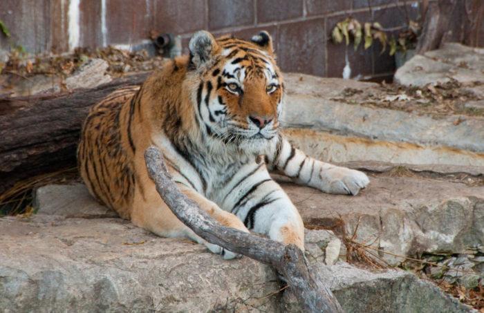 sevastopolskiy-zoopark-700x453