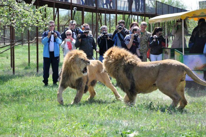 safari-park-taygan-700x465