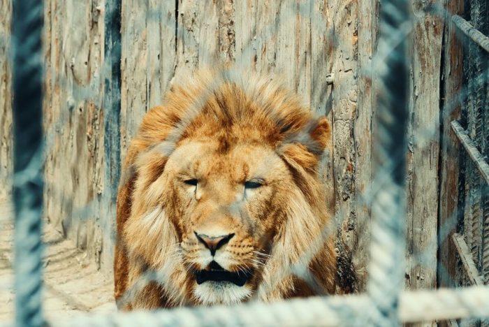 zoopark-baba-frosya-700x468