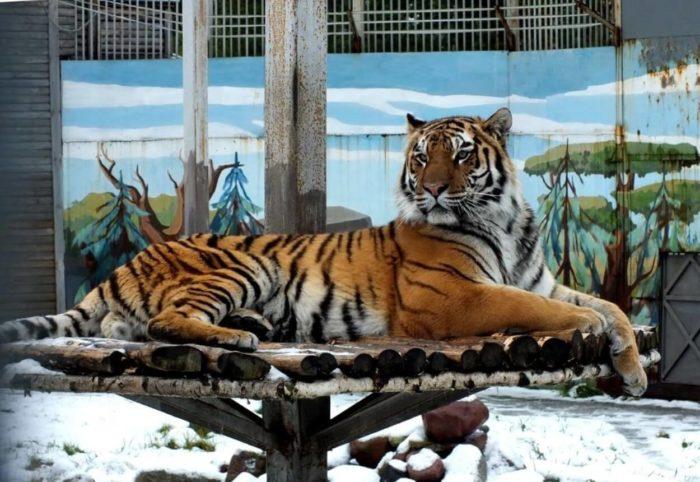 Ivanovskiy-zoopark-700x482