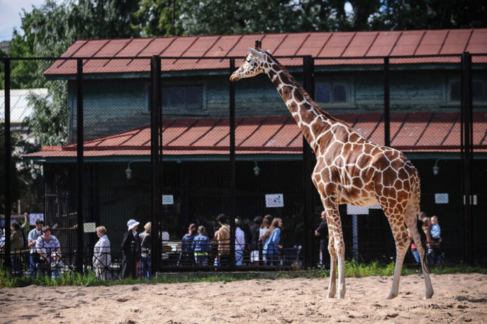 Leningradskiy-zoopark-700x466