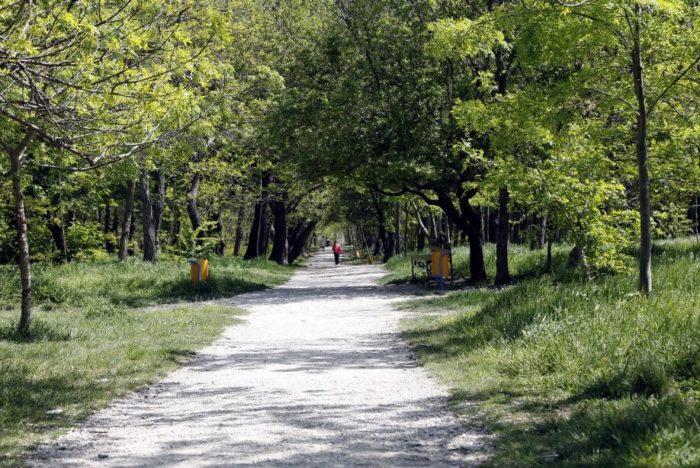 Pionerskaya-roscha-700x468