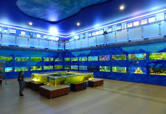 Dom-akvarium-700x480