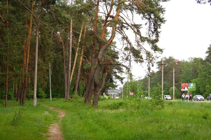 Lesopark-Gorodskoy-bor-700x465