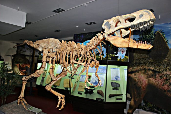Vyatskiy-paleontologicheskiy-muzey-700x467