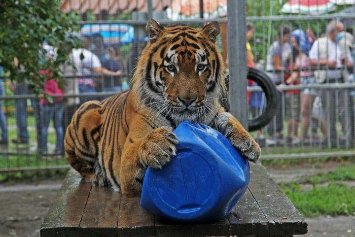 Barnaulskiy-zoopark-Lesnaya-skazka-700x467