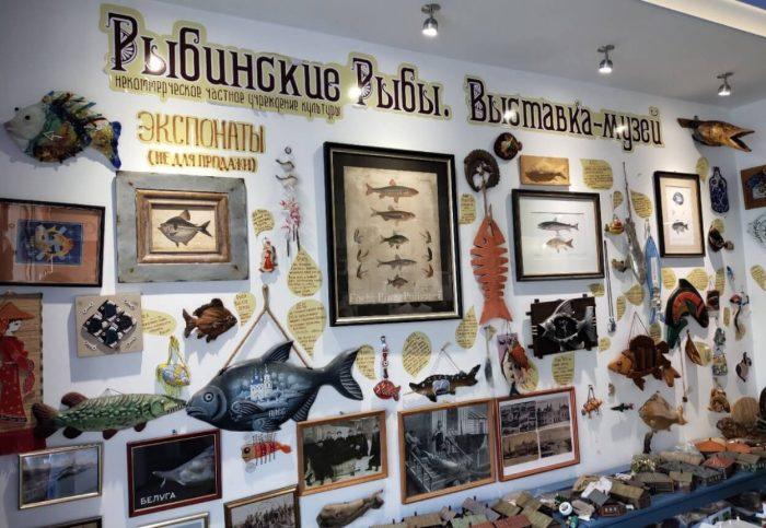 Muzey-Rybinskie-ryby-700x483